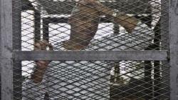 'Jornalista Mohamed Fahmy, da Al Jazeera, deveria ser libertado, não submetido a novo julgamento no