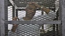 La famille de Mohammed Fahmy espère sa déportation au