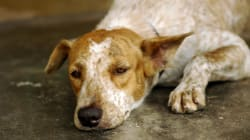 Pets From Abused Homes To Get New Start In