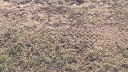 Montpellier - PSG se jouera sur une pelouse aux airs de champ de