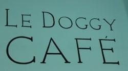 Une sortie avec son chien au tout nouveau Doggy Café