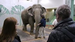 Animal Rights Group Adds Edmonton Zoo To 'Hall Of