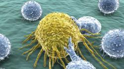 L'étude sur le cancer et le