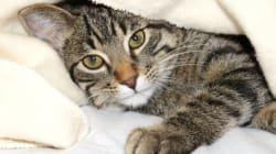 Un chat sauve la vie d'un bébé en le protégeant du