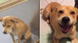 Les touchantes photos d'animaux abandonnés avant et après leur