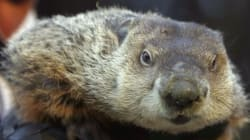 WATCH: 4 Reasons Why Canada Should Forget Groundhog