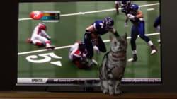 バズフィード初となるテレビCMのテーマはやはり「ネコ」だった