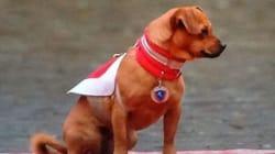 E Briciola, il cane dei carabinieri, diventò una star
