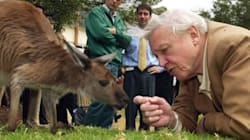 When Naturalist Sir David Attenborough Was Scared By A Rat In An Indian