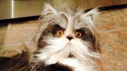 Atchoum le chat, la nouvelle star du