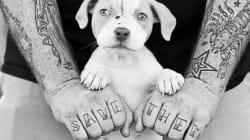 Brian Battista salva i cani abbandonati... con un
