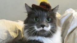 Voici Hamilton, le chat-hipster qui porte à merveille la