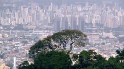 Plano Municipal da Mata Atlântica: 'por cidades mais humanas e