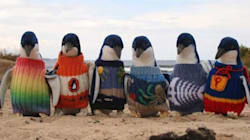 Le plus vieil homme d'Australie tricote des pulls pour sauver des manchots
