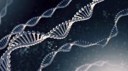 「クローンES細胞」で拒絶反応を回避できる?