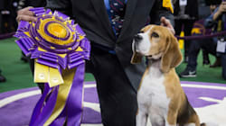 B.C. Beagle Wins Top Honour In Dog World