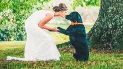 20 bodas en las que las mascotas fueron un invitado más