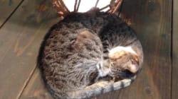 猫がいる沖縄の10の風景
