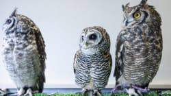 London's Pop-Up Owl Bar Promises To Be A