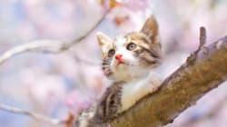 ひと足先に......春を楽しむ猫たち(画像)