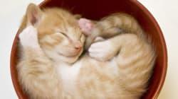 猫、こんなに丸くなる(画像集)