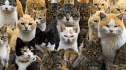 Benvenuti a Cat Island, l'isola abitata dai