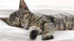 15 fotos de animais dormindo para inspirar uma noite perfeita de