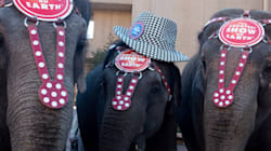 Ringling Bros. Circus Won't Be Doing This