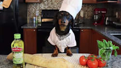 Making Bruschetta Is So Easy, Even A Dog Can Do