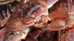 Début de la pêche au crabe prévue le 26
