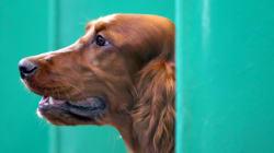 Voici à quoi ressemble une niche pour chien de 40 000