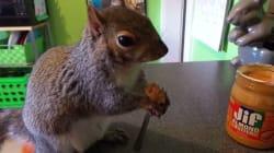 Voici Wally, l'écureuil bien