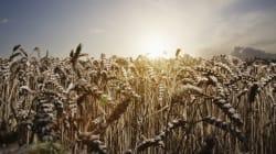 L'OMS ajoute cinq pesticides à la liste des cancérigènes probables ou