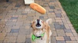 Ce chien ne sait vraiment pas attraper la
