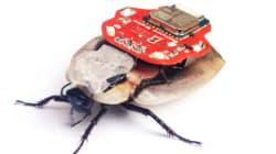 Les cafards cyborgs créent un débat