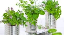 Faire pousser soi-même des légumes... dans sa