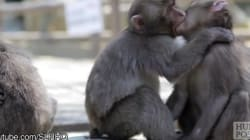 These Animals Making Out Awkwardly Will Remind You Of Your Teenage