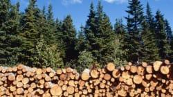 Défense de la foresterie durable : l'Alliance forêt boréale est