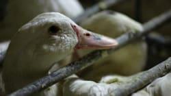 Procès du foie gras: Soulard m'a