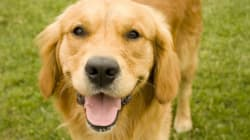 Un chien alerte sa famille d'un incendie et tous en sortent