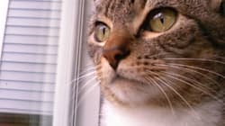 Une chatte rentre après une fugue de 6