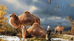 Il y a des milliers d'années, les Albertains chassaient... le