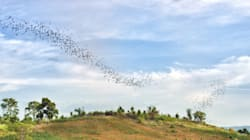 Wind Turbines Kill Too Many Bats -- Let's Change