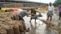 Unseasonal Rains Hit Farmers Hard As Fruits, Wheat Crops