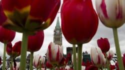 Festival canadien des tulipes d'Ottawa: la thématique militaire