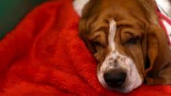 ¿Leen los perros la mirada de los seres
