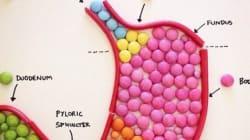 L'anatomie en
