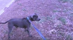 Ce chien est terrifié par les cônes
