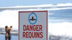 Un adolescent de 13 ans meurt après une attaque de requin à La