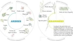 Les plantes qui vous rendent allergiques rassemblées en une